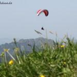 Gleitschirmflieger über Almwiese