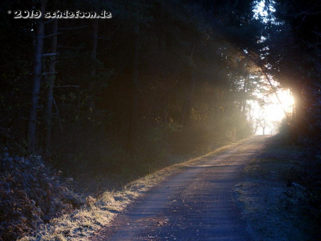 Sonnenstrahlen beleuchten eine schmale Waldstraße