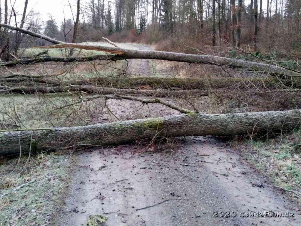 Drei große Bäume liegen nebeneinander quer auf dem Weg
