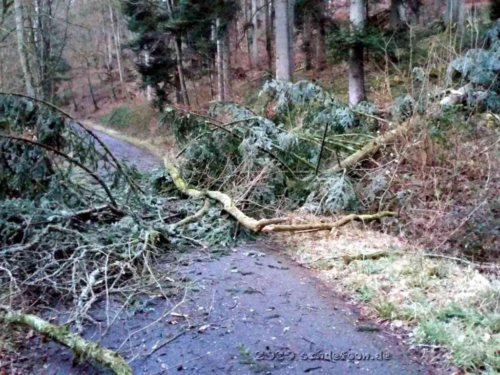 Eine Baumkrone versperrt den Waldweg