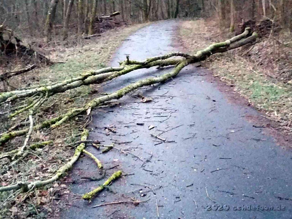 Zwei kleine Bäume liegen quer über dem Weg
