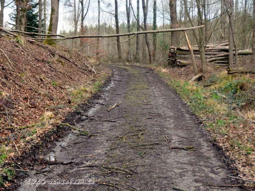 Ein Baum ist quer über einem Waldweg abgeknickt