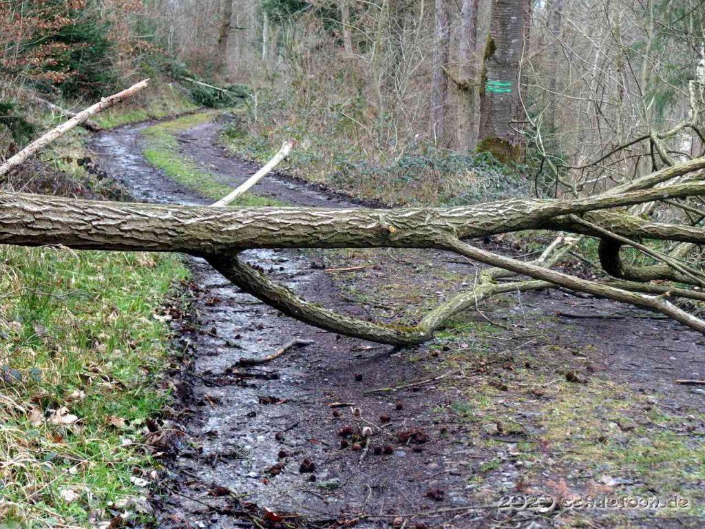Ein Baum mit Ästen liegt auf einem Waldweg