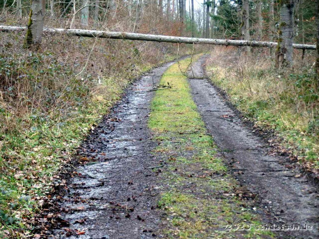Ein dünner Baum hängt quer über einem Waldweg