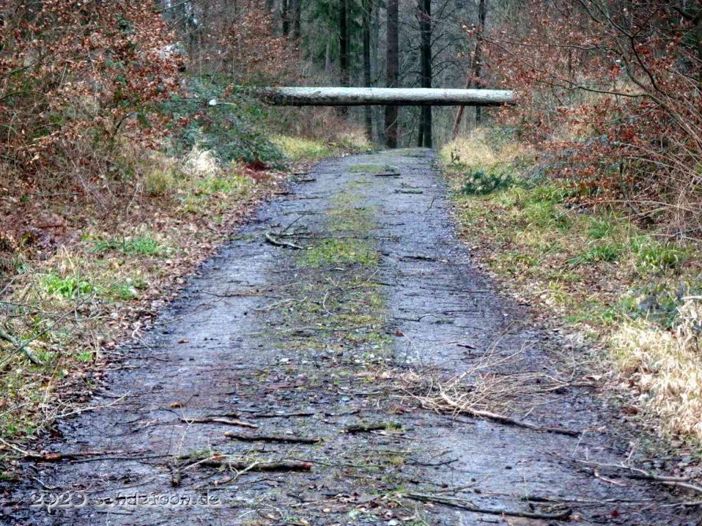 Ein dicker Baumstamm liegt quer über einem Waldweg
