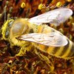 Eine Biene ist auf einer Sonnenblume gelandet