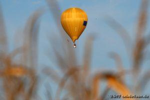 Ein gelber Heißluftballon schwebt hinter Blättern von Maispflanzen